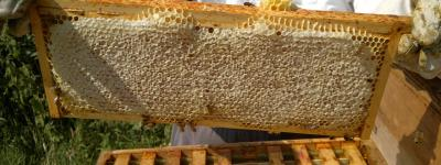 Honey Extraction